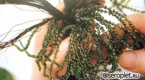Ива из бисера в пошаговом мастер-классе с фото и схемой плетения